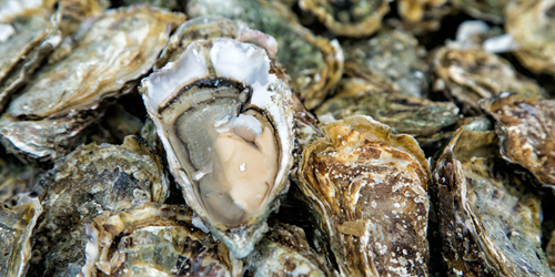 Closeup of Doonecastle Oysters